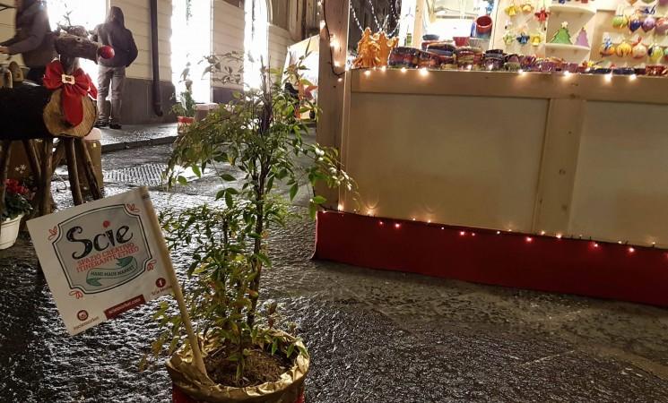 Scie market Catania, artigianato indipendente e cultura sostenibile