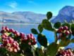 Urge Risorgimento Sicilia La vita ricomincia Cercansi turisti