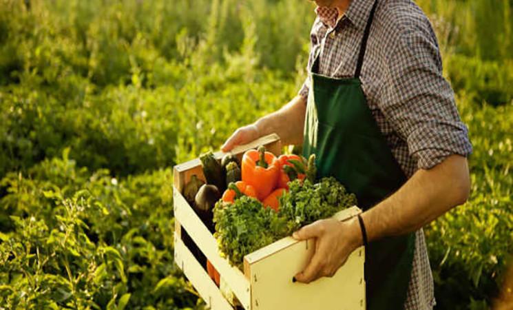 Medifood, nasce l'hub dell'agroalimentare siciliano