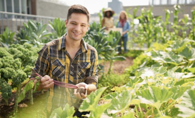 """Agricoltura, in Sicilia """"record nazionale"""" di imprese giovanili"""