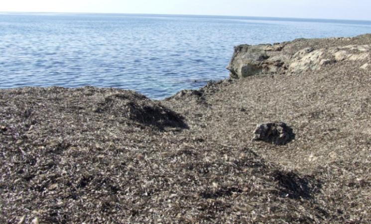 Posidonia, in Sicilia da rifiuto organico ad affare economico