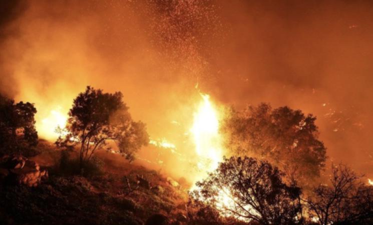 Incendi, ettari di bosco in fumo sul palermitano monte Grifone