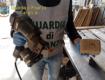 Falsi, la Guardia di Finanza sequestra a Catania ottomila pallet