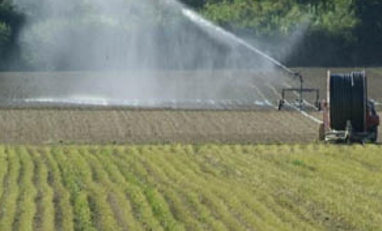 """Gela, la denuncia degli agricoltori""""Manca il personale per irrigare"""""""