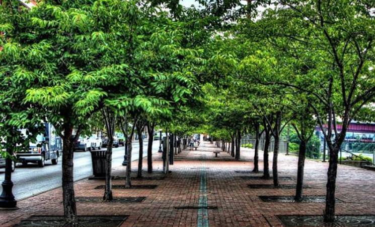 Verde pubblico, trenta milioni di euro alle Città metropolitane per gli alberi