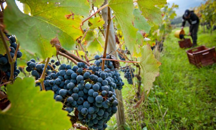 Ocm vino per i Paesi terzi, varato un bando da otto milioni di euro