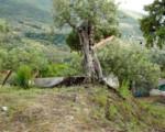 San Mauro Castelverde, un progetto per contrada Borrello