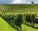 Agricoltura, in calo aziende e lavoratori
