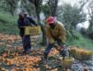 Caporalato, in Sicilia piaga per il 40% dei braccianti