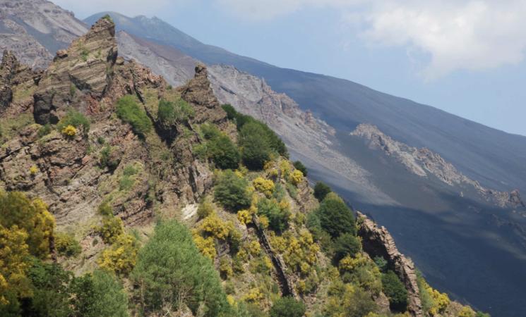 Biodiversità, 29 specie floristiche si trovano soltanto sull'Etna