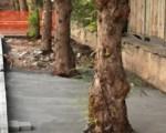 Palermo, Sopralluogo in viale Francia e sospensione lavori rifacimento marciapiede