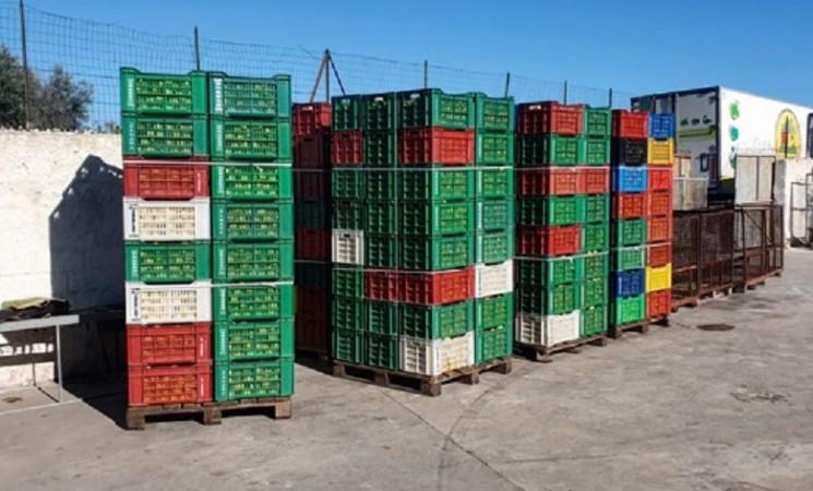 Siracusa, sequestrati 22mila chili di limoni spagnoli