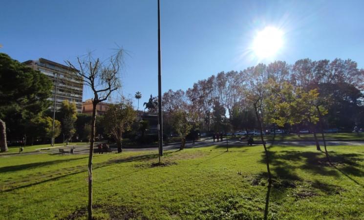 Verde, il Soroptimist rigenera piazza Roma con 25 nuovi alberi