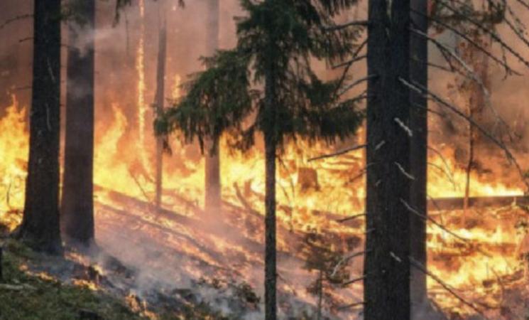 Reati ambientali in Italia, la metà degli incendi tra Sicilia e Calabria