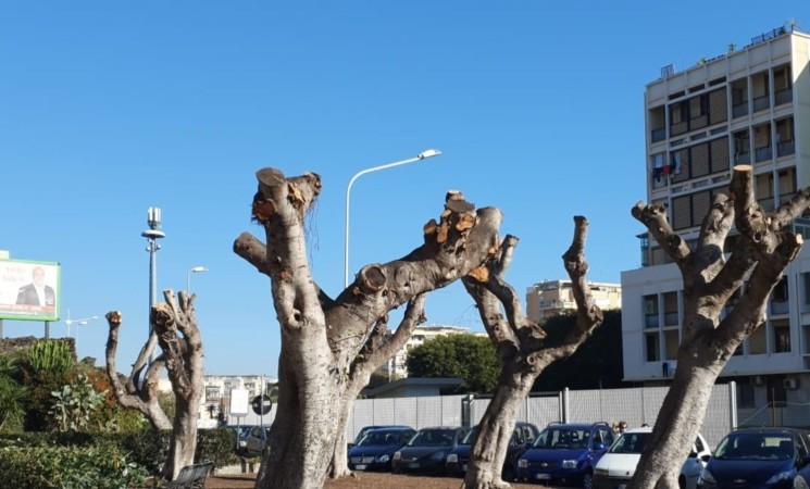 Catania, capitozzatura selvaggia degli alberi in via Alcide De Gasperi