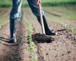 Il lavoro in agricoltura sta al sud, in vendita terreni della Banca nazionale