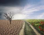 Clima, la Sicilia sarà un deserto in due-tre decenni