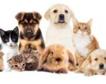Tutela e benessere degli animali sulla piattaforma Catania Semplice