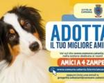 Catania, adottare un cane scegliendolo on line