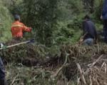 Operai forestali, occorre trovare i fondi