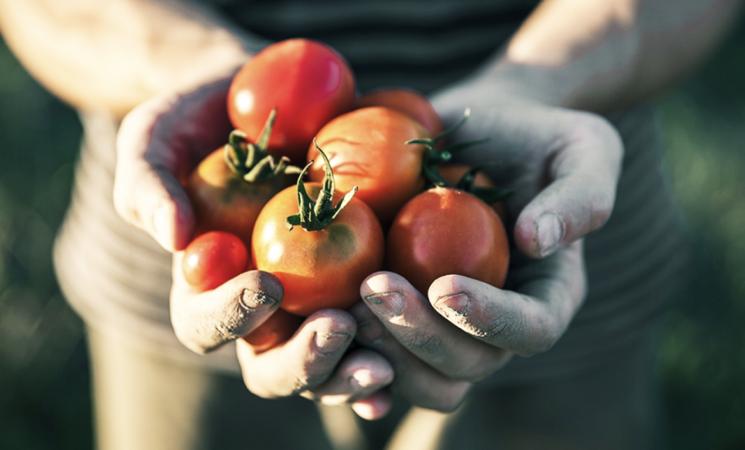 L'agroalimentare in Sicilia cresce nonostante la pandemia