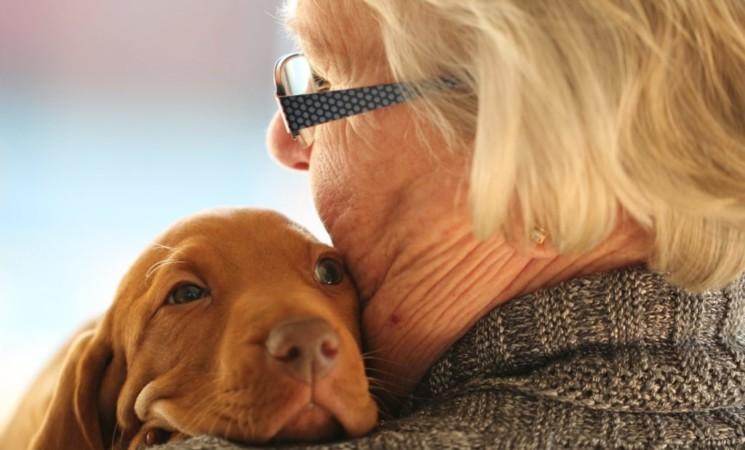 Catania, assistenza gratuita per i cani dei pazienti Covid