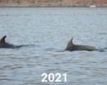 Eolie, riparte monitoraggio delfini per ridurre i rischi della pesca