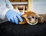 Palermo, centro recupero tartarughe marine apre al pubblico