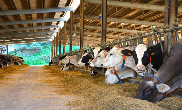 Zootecnia, dalla Regione 75 milioni per gli allevatori