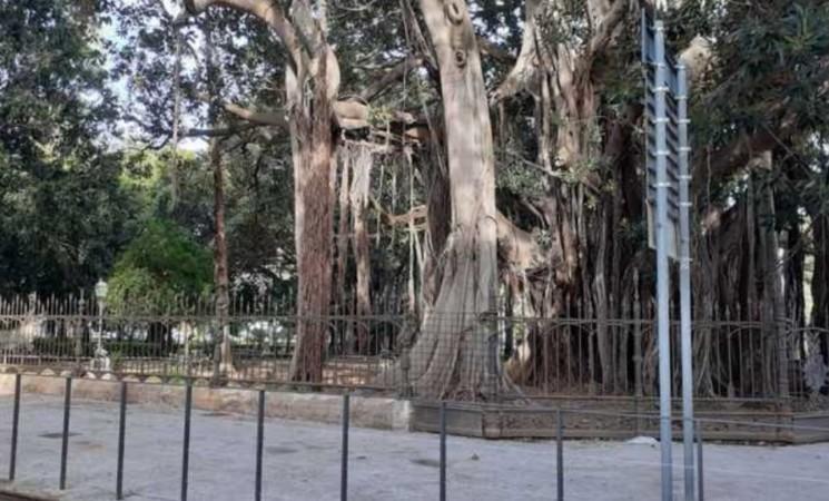 Palermo, rimossa la pedana in piazza Marina davanti al Ficus