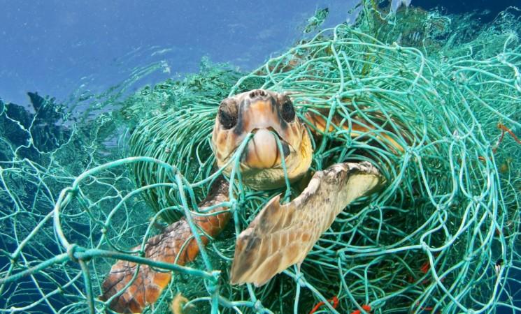 Isole Eolie, tartaruga caretta caretta intrappolata in rete da pesca