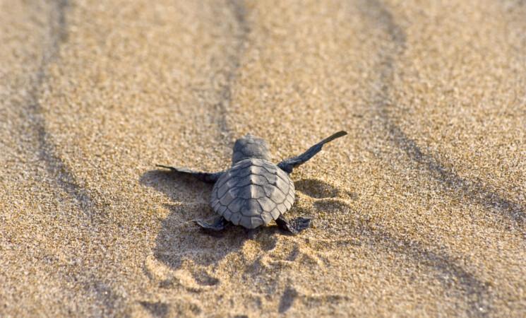Giornata mondiale tartarughe marine, due avvistate a Filicudi