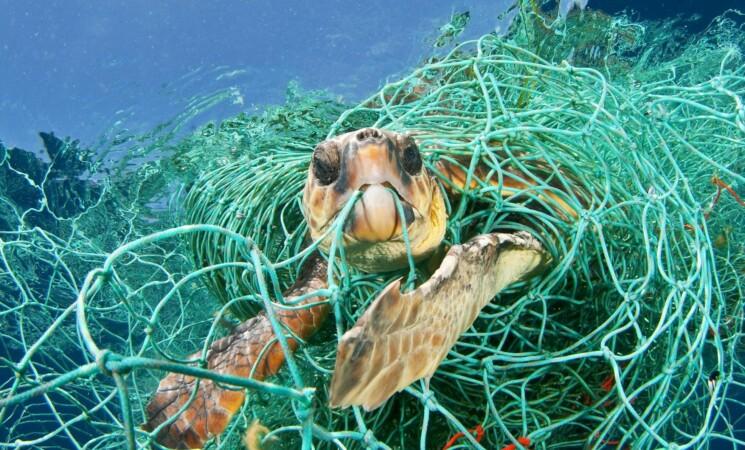 Tartaruga con amo in gola in spiaggia, salvata da Oipa Gela