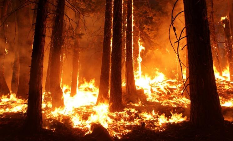Incendi in Sicilia, a Partinico evacuato agriturismo