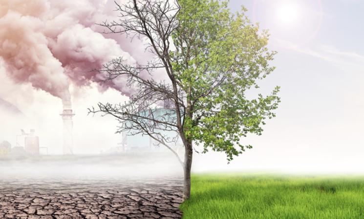 Clima, in Italia cambia anche la biodiversità, lo studio