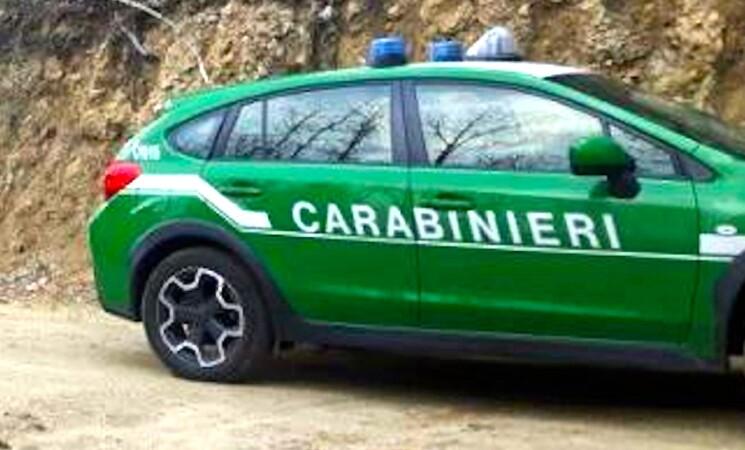 Corte Conti, con la Forestale in Carabinieri risparmio di 31 mln
