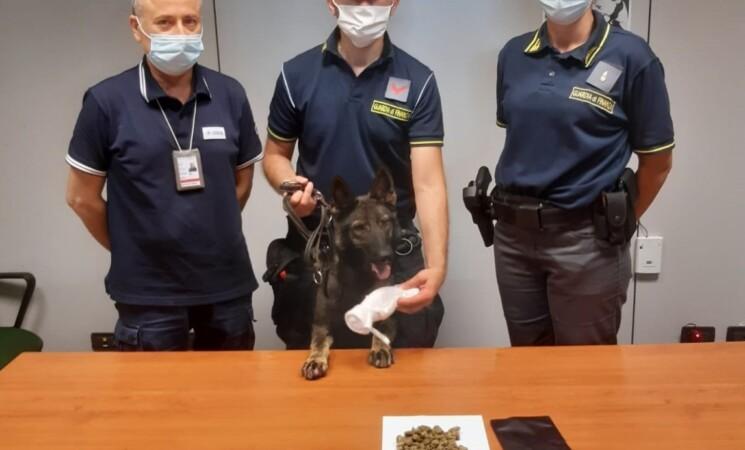 Aeroporto Palermo, droga scoperta nelle valigie di due passeggeri