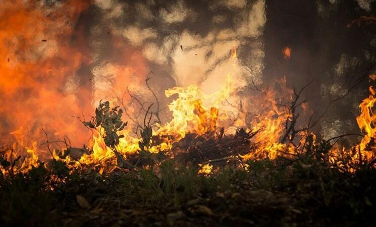 Incendi in provincia di Palermo, danni sulle Madonie