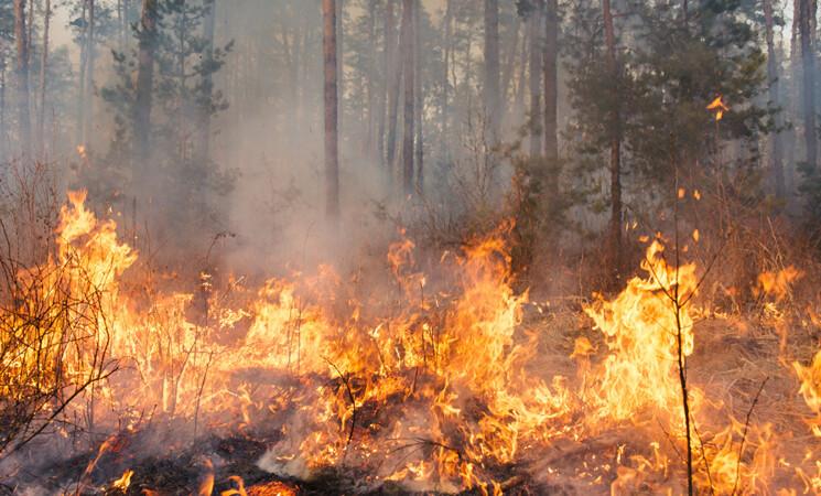 Da incendi boschivi sostanze che inquinano il Mediterraneo