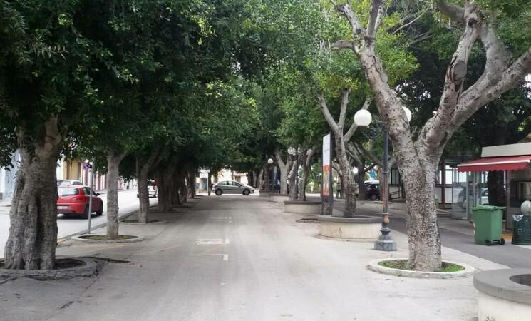 Augusta, scoppia la polemica dopo la potatura degli alberi