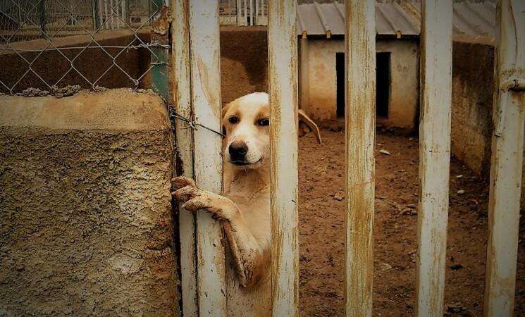 Cani randagi a Catania, risponde l'Assessore comunale Cristaldi